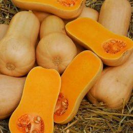 squash-butternut