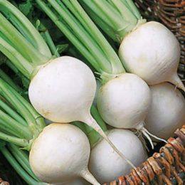 White-Lady-F1-Hybird-Turnip
