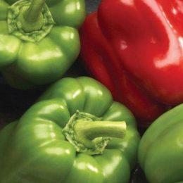 sweet-pepper