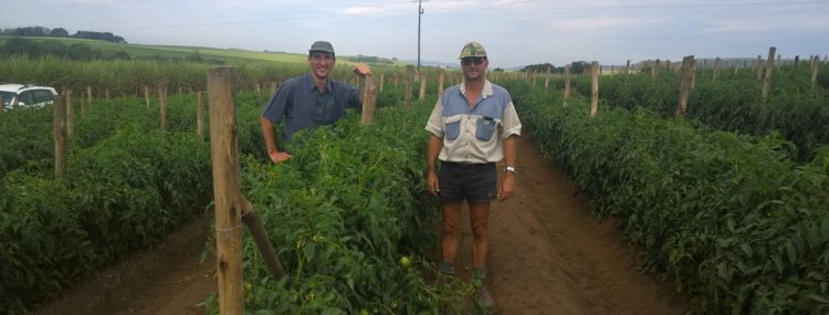 Johan Stronhorst – Sakata Crop Manager – Tomato's and Peppers and Hercules Maritz – Farm Manager – Hohls Farming Eshowe – in a field of Disco Tomato