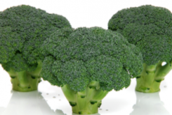 Broccoli | Choosing the Correct Variety for the Season