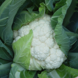 Choosing the Correct Cauliflower for the Season