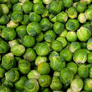 brussels sprout seed