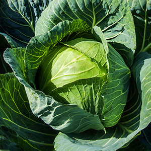 Superslam Cabbage