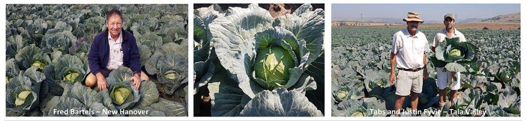 Superslam Cabbage