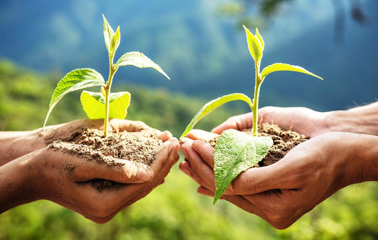 Hands holding two seedlings